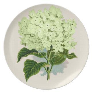 PixDezines vintage hydrangea, green Plate