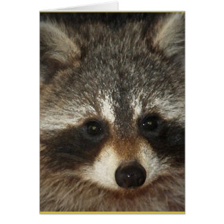 Pixie; one remarkable racoon full of kindness. card