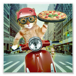 pizza cat - cat - pizza delivery photo print