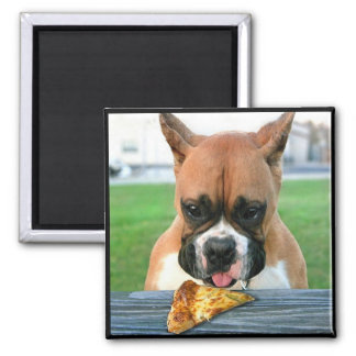 Pizza eating boxer magnet