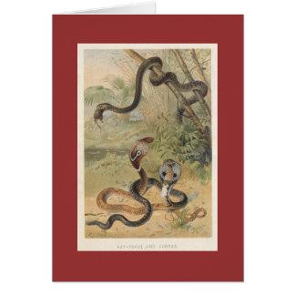 PJ Smith - Rat-Snake & Cobras Greeting Card