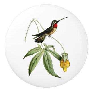 Plain Capped Star Throat Hummingbird Ceramic Knob