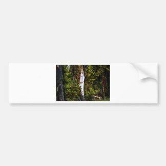 Plain White Tree Bumper Sticker