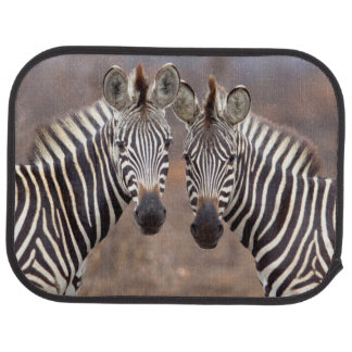 Plain Zebras, Kruger National Park Car Mat