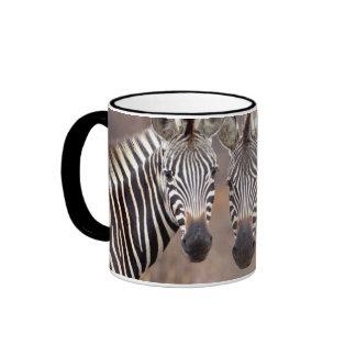 Plain Zebras, Kruger National Park Ringer Mug