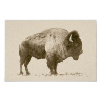 Plains Bison Photo Print