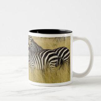 Plains Zebra (Equus quagga) in grass, Masai Mara 2 Two-Tone Mug