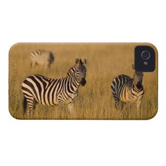 Plains Zebra (Equus quagga) in grass, Masai Mara iPhone 4 Cases