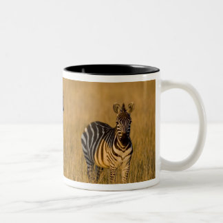 Plains Zebra (Equus quagga) in grass, Masai Mara Two-Tone Mug