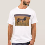 Plains Zebra Equus quagga) in grass, Masai T-Shirt
