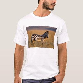 Plains Zebra Equus quagga) in grass, Masai T-Shirt