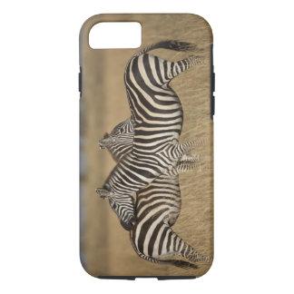 Plains Zebra (Equus quagga) pair grooming, Masai iPhone 7 Case