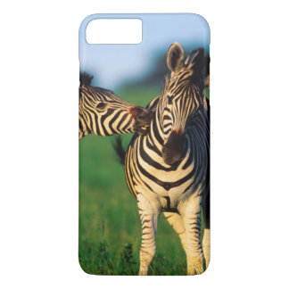 Plains Zebra (Equus Quagga) Pair Grooming, Tala iPhone 7 Plus Case