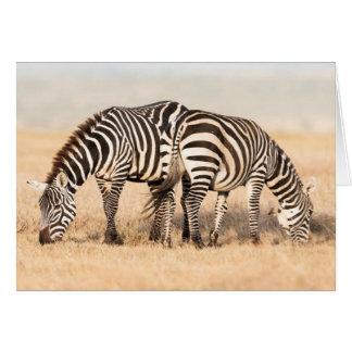 Plains Zebra Or Common Zebra (Equus Quagga) 2 Greeting Card
