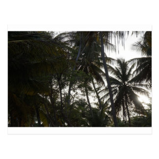 Plam trees in Mayaro Beach Postcard