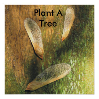 Plant A Tree Maple Helicopters Poster