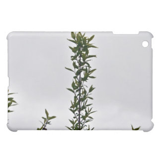 Plant Against Cloudy Sky Cover For The iPad Mini