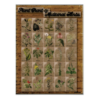 "Plant Chart of Medicinal Herbs 1  24"" x 20"""