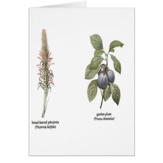 Plant Design Greeting Card