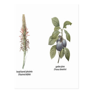 Plant Design Postcard