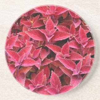Plant/Flower Series---Red Coleus Coaster