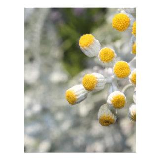 Plant Flyer Design