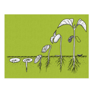 Plant Germination Illustration Postcard