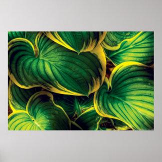 Plant - Hosta Leaves Poster