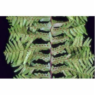 Plant Leafy Acrylic Cut Outs
