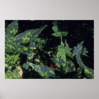 Plant Mystic Foliage Posters