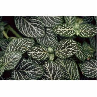 Plant Nerve Plant Photo Sculpture