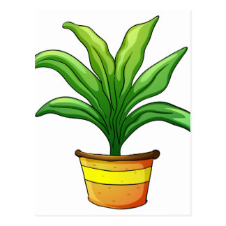 plant pot postcard