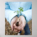 Plant seedling poster