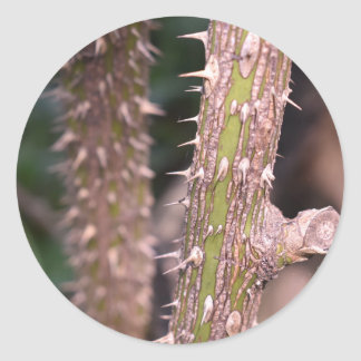 Plant Stem Thorns Nature Park Photography Classic Round Sticker