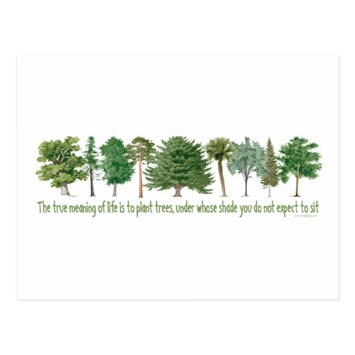 Plant Trees - Tree Lover, Hugger Post Card