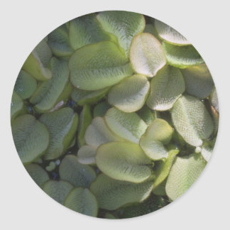 Plant Water Lily Sticker