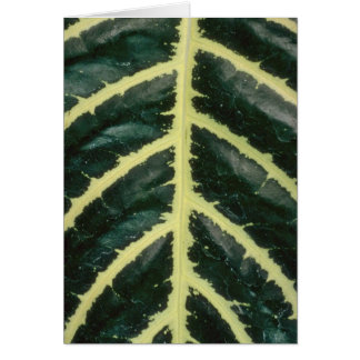 Plant Zebra Cards