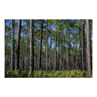 Planted Pines and Saw Palmetto Print