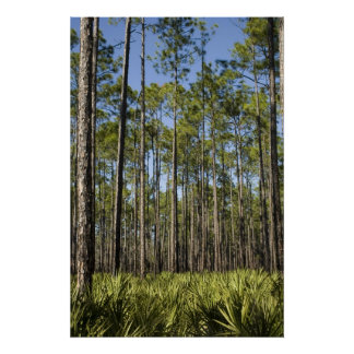 Planted Pines and Saw Palmettos Print