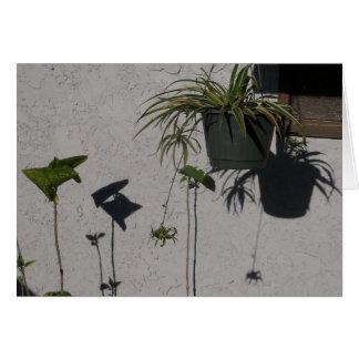 plants and morning shadows card
