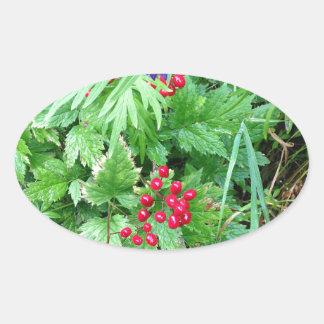 Plants at Pioneer Falls Butte Alaska Oval Sticker