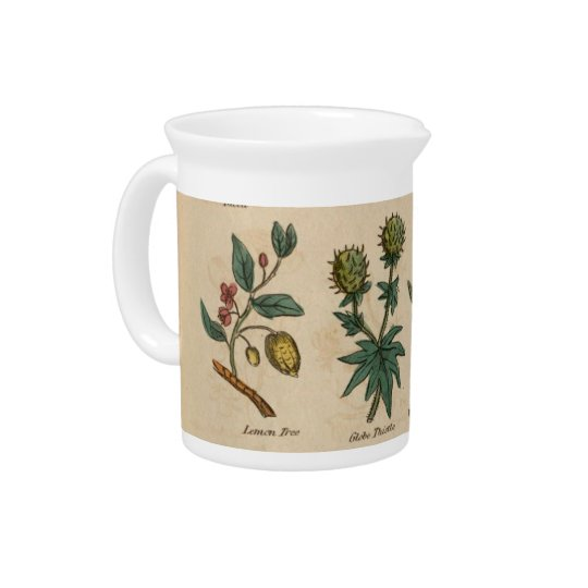 Plants Beverage Pitchers