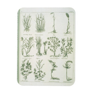 Plants from Culpeper's 'English Physician and Comp Rectangular Photo Magnet