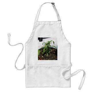 Plants Grass Apron