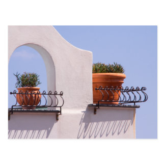 Plants Hanging Out In Positano Italy Postcard