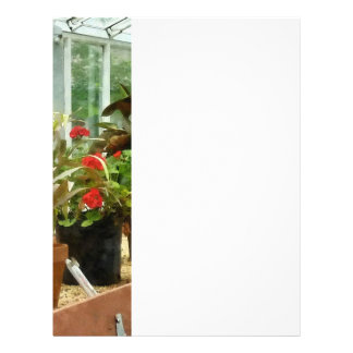 Plants in Greenhouse Full Color Flyer