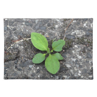 Plants on a tarred road. placemat