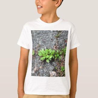 Plants on a tarred road. shirts