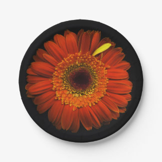 Plants on Plates Orange Daisy