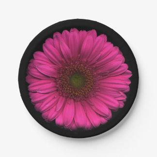 Plants on Plates Pink Daisy